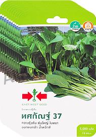 ผักกวางตุ้งต้นทศกัณฐ์37
