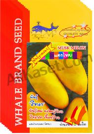 เมล็ดแตงไทย พันธ์ุสีทอง
