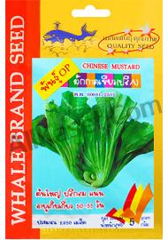 เมล็ดผักกาดเขียว(ปลีA)