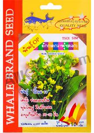 ผักกาดกวางตุ้งดอกบิ๊กเอ