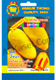 เมล็ดแตงไทย พันธุ์สีทอง