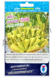 เมล็ดพริก นางนวล T2008
